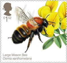 bee stamps postage stamp with mason bee illustration