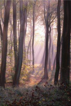 Luz de uma manha de outono.  Fotografia: Ceri Jones, no 500px.