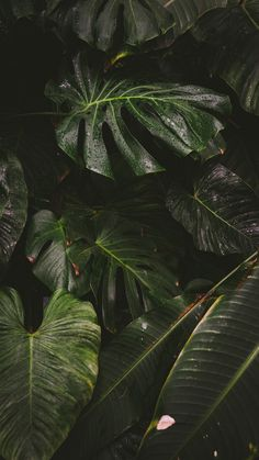 Botanical Gardens & Tropical Plants Photography - Gardening for beginners and gardening ideas tips kids Plant Wallpaper, Nature Wallpaper, Wallpaper Backgrounds, Iphone Wallpaper, Phone Backgrounds, Jungle Pattern, Plant Background, Greenery Background, Green Pictures