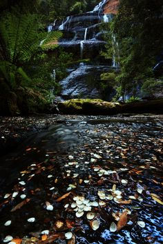 The Tasmanian Wilderness a World heritage. I'd love to run and walk around here naked.