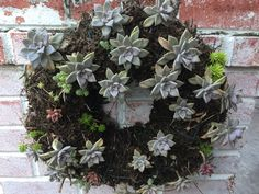 I refused to pay a nursery $75+ dollars for a succulent wreath so I started my own 2017.