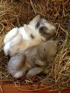 Adorable Sleeping Bunnies from WOW Earth Pics via Twitter