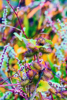 Soft Focus Flowers and Floral Macro Abstractions @ Photos & ArtPhotos & Art Unique Flowers, Flowers Nature, My Flower, Wild Flowers, Beautiful Flowers, Simply Beautiful, Flower Boxes, Mother Nature, Planting Flowers