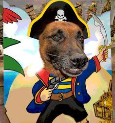 Dog Shaming - Bad Dog Photos - DogShamimg - Zoomers