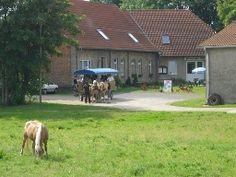 FeWo für 4 Pers. auf Reiterhof in Lübz (Mecklenb. Seenpl.) mit Reitangebot für Anfänger und Fortgeschrittene.