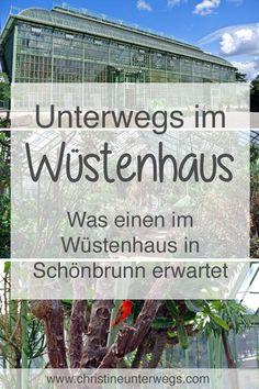 Meine #Tipps für einen #Ausflug ins #Wüstenhaus #Schönbrunn findest du hier: https://www.christineunterwegs.com/ausfluege/wuestenhaus-schoenbrunn/