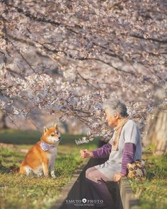 Japanese photographer Yasuto took a series of heartwarming and wholesome photos of his grandmother and her dog, a Shiba Inu. Corgi Puppies, Husky Corgi, Shiba Inu, Bull Terriers, Black Labs, Animals And Pets, Cute Animals, Every Dog Breed, Japanese Dogs