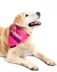 "Perfect for your adorable ""DRAMA QUEEN"". http://www.headsupfortails.com/heads-up-for-tails-drama-queen-bandana.html #dogs #dramaqueen #pinkbandana # pets #prettybandana #petaccessories #headsupfortails #huft"
