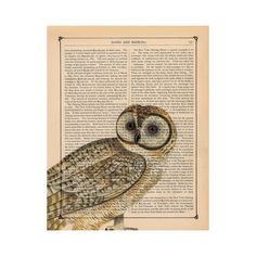FFFFOUND! | FREE SHIPPING WORLDWIDE FALL OWL PRINT OWL PEEPER by... ❤ liked on Polyvore