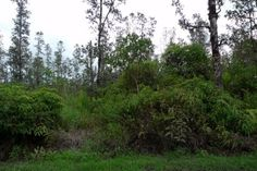 3 Acres in Hawaii County. This property is used for land - residential. A 3 acres property with an asking price of $19,000. Nice vacant wooded lot on makai side of Hopue Road 3 near Alula Road D in Ha