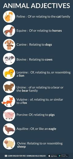 Animal adjectives English Resources, English Activities, English Tips, English Class, English Words, English Lessons, English Grammar, Teaching English, English Language