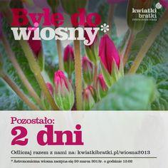 Byle do wiosny - #countdown - 2 dni #urbangardening