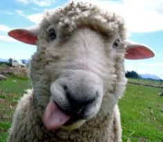 Art sheep be-happy