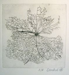 leaf skeleton Patterns In Nature, Textures Patterns, Line Geometry, Leaf Skeleton, Growth And Decay, Small Drawings, Nature Plants, Leaf Art, Blue Art