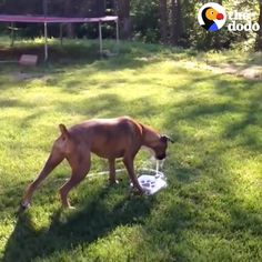 Your dog& going to hve so much fun with this during the summer! Source by The post Dog Water Fountain appeared first on Daisy Dogs. Funny Animal Videos, Cute Funny Animals, Cute Baby Animals, Funny Dogs, Dog Videos, Animals Dog, Dog Friendly Backyard, Dog Backyard, Pet Dogs