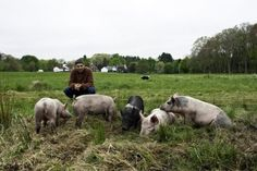Andrew with pigs