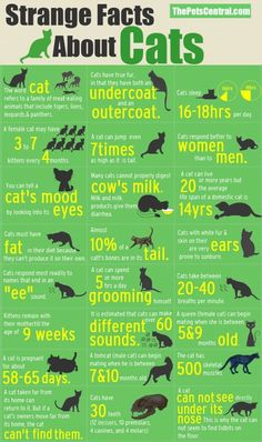 Strange Cat Facts