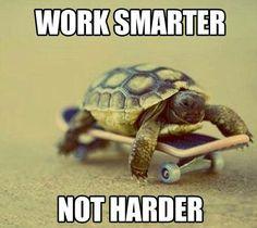 Turtle smarts