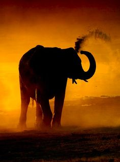 elephant & sunset