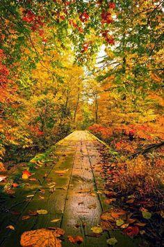Autumn path in Akita