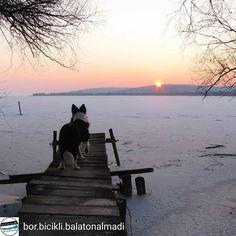 @Regrann from @bor.bicikli.balatonalmadi -  Kukucs!   Peek-a-boo! #balatonfuzfo #balaton #jeges #jeg #ho #naplemente #seta #bordercollie #kutya #lakebalaton #ice #frozen #snow #dog #dogwalking #welovewalkingdog #peekaboo #beautiful #amazing #sunset #instahun #instagood #mik #ikozosseg #igkozosseg #ig_hungary #igdaily #hungary #hungary_gram #loves_hungary Peek A Boos, Dog Walking, Border Collie, Hungary, Snow, Sunset, Amazing, Dogs, Instagram Posts