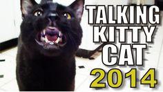Talking Kitty Cat - 2014 (+playlist)