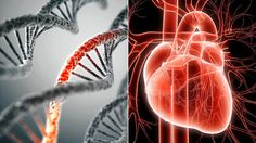 Can You Overcome Your Genetic Risk of Heart Disease? - KEEPHEALTHYALWAYS.COM - Reliable Health Advice and Remedies