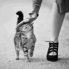 Sweet happy kitty ... :)