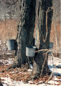 Winter also means maple season in Tioga County! Join us for the 10th Annual Maple Weekend on March 22 and 23, 2014 from 10 a.m. to 4 p.m. Visit participating maple producers in Tioga County, including Patterson Farms--the largest maple producer in the state of Pennsylvania--for maple syrup, maple candy, maple barbecue sauce and more. Some locations are also serving pancakes so you can taste before you buy. Locations in Potter County also participate: go to www.pamaple.com to learn more.