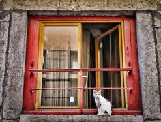 Window cat by kimbar/very busy, in and out, via Flickr