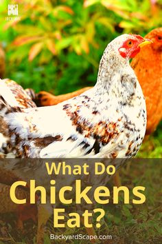 After adopting a chicken, we learned quickly what they can eat and what they can't. We'll share these with you. What To Feed Chickens, Raising Chickens, Chicken Eating, Canned Chicken, Backyard Fences, Backyard Projects, Grub Worms, Grass Weeds, Kinds Of Vegetables
