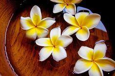 graduation time hawaiian style!