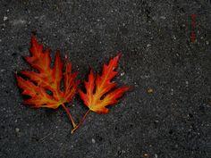 golden autumn lieaves.