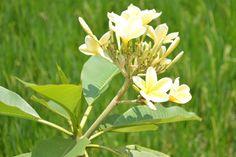 #flowers #nagrak #java #indonesia