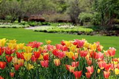 Spring at Cantingy Gardens, Winfield Illinios