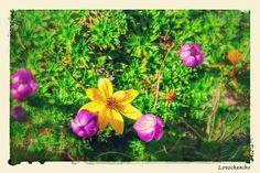 Jardín de flores diminutas