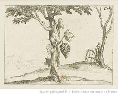 [La vie de la Mère de Dieu représentée par des emblèmes]. [6], [Le cep de vigne] : [estampe] / [Jacques Callot] - 1