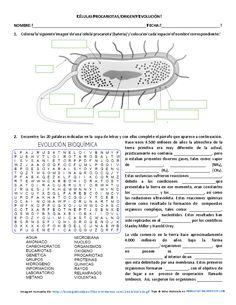 Una nueva colaboración en el blog de parte de Johanna Milena Lozano Olivares docente de Ciencias Naturales en el municipio de Sibaté, en el departamento de Cundinamarca en Colombia. Nos envía una ficha con tres actividades para trabajar las células procarióticas para un nivel de secundaria en la que combina …
