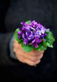 .still my favorite flower:  violets