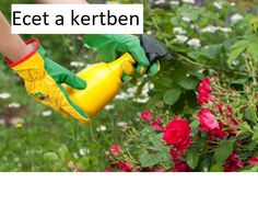 Az ecet igazi csodaszer a kertben, használd te is! Organic Soil, Organic Gardening, Get Rid Of Mold, Natural Pesticides, Garden Pests, Types Of Plants, Pest Control, Garden Projects, Vegetable Garden