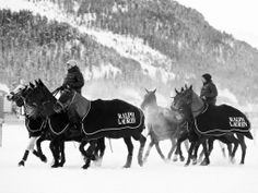 The St. Moritz Polo World Cup on Snow Team Ralph Lauren was lead by Michael Bickford and included Ralph Lauren spokesmodel and polo superstar, Nacho Figueras. Equestrian Decor, Equestrian Style, Rugby, The Scorpio Races, Winter Horse, St Moritz, Kings Game, Sport Of Kings, Horse Ranch