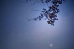 Cherry blossom and the moon by Masaru Kuroda on 500px