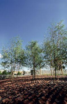 Recyclinggarden-Birchtrees-on-the-rooftop « Landscape Architecture Works Landscape Architecture, Landscape Design, Garden Design, What Is Landscape, Ecology Design, Urban Park, Private Garden, Contemporary Landscape, Backyard Patio