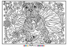 Free printable American Pit Bull Terrier coloring page available for download. Simple and detailed versions for adults and kids.