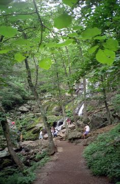 Here's a list of beautiful hikes less than three miles in length that showcase some of the most beautiful landscapes in Virginia. Get Outdoors, The Great Outdoors, The Places Youll Go, Places To See, Virginia Waterfalls, Hiking In Virginia, Waterfall Hikes, Virginia Is For Lovers, Vacation Spots