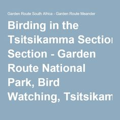 Birding in the Tsitsikamma Section - Garden Route National Park, Bird Watching, Tsitsikamma National Park, Garden Route, South Africa Tsitsikamma National Park, March Holidays, Bird Watching, South Africa, National Parks, Places To Visit, Bucket, Activities, Garden