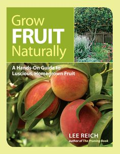 Get your fruit garden off to a great start by implementing these techniques for planning a fruit garden.