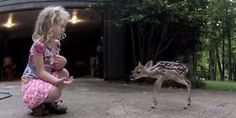 """The Deer Whisperer.""    (This is A Heart-Warming Video of Trust From A Young Wild Animal, And A Little Girl.  Please Click-On The Photograph.)"