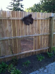Garden Year 3 Dog Proof Garden Fence Garden Earth