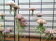 Steampunk Tendencies | Jellyfish air plant (Tillandsia Bromeliads) H/T Deana Smith https://www.facebook.com/groups/steampunktendencies/permalink/641201362600970/